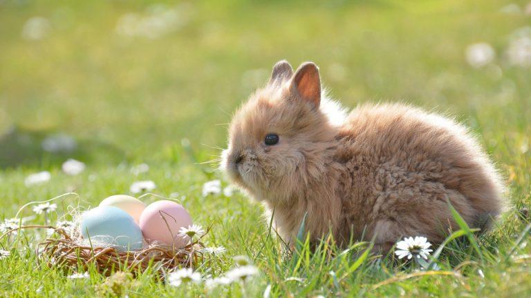 Wielkanoc to czas, kiedy większość z nas składa sobie życzenia